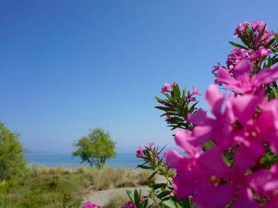 Mari-Rena Plaz - Paralio Astros - garden